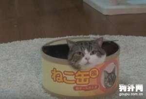 狗狗可不可以吃猫咪罐头?